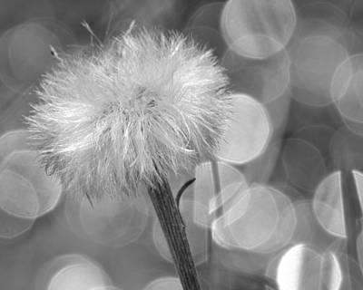 Digital Art - Spring Reflection Two by Ann Bridges