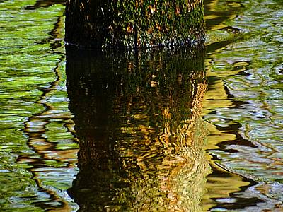 Photograph - Spring Reflections by Beth Akerman