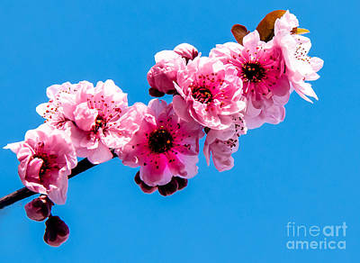 Photograph - Spring by Robert Bales