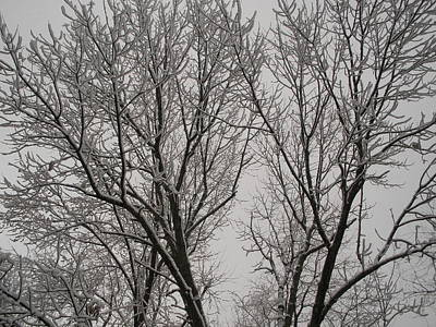 Spring Snow Art Print by Suzanne Fenster