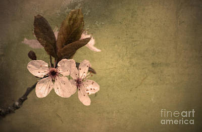 Photograph - Spring Solitude by Tara Turner