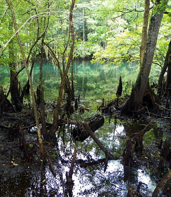 Chiefland Photograph - Spring Swamp Reflection by Sheri McLeroy