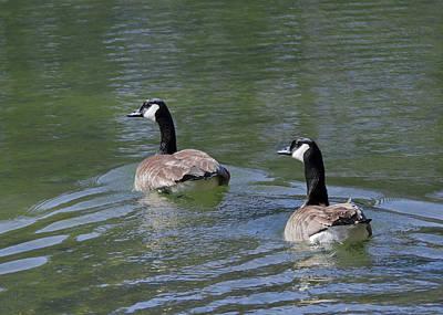 Goose Photograph - Spring Thaw Water Geese by LeeAnn McLaneGoetz McLaneGoetzStudioLLCcom