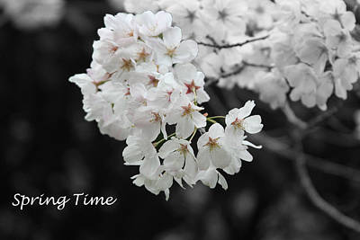 Keep In Touch Photograph - Spring Time by Gunz The Great