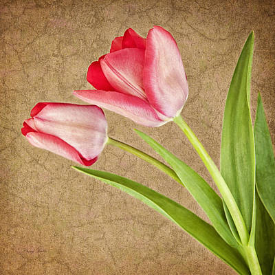 Photograph - Spring Tulips by Cheryl Davis