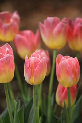 Photograph - Spring Tulips by Linda Sannuti