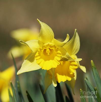 Art Print featuring the photograph Springing Spring by Julie Clements