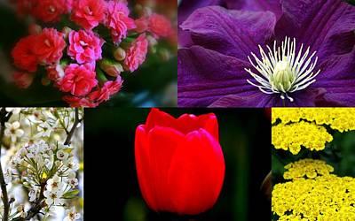 Digital Art - Springtime Blooms Collage by Kay Novy