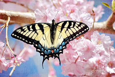 Photograph - Springtime Butterfly by Cheryl Davis