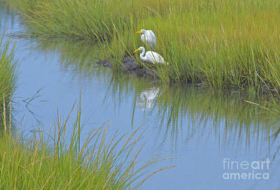 Northeast Painting - Springtime Herons by Cindy Lee Longhini