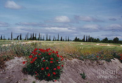 Springtime In Spain Art Print by Barbara Plattenburg