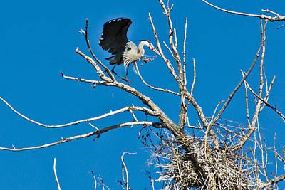 Springtime Nesting In Colorado Art Print