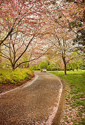 Photograph - Springtime Path by Cheryl Davis
