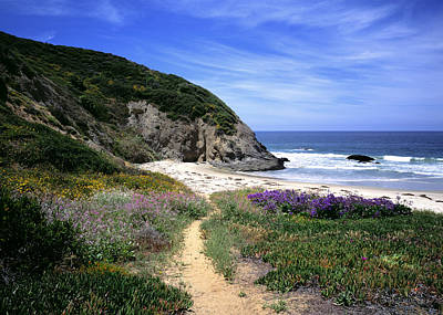 Photograph - Springtime Trail  Dana Point Headlands by Cliff Wassmann