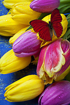 Springtime Tulips And Red Butterfly Art Print by Garry Gay