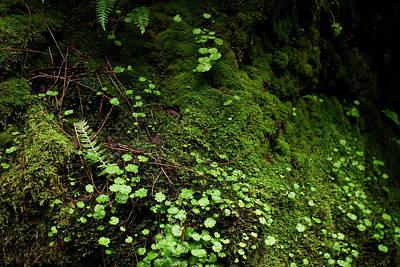 Photograph - Sprinkle On Moss by Lorraine Devon Wilke