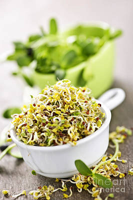 Broccoli Photograph - Sprouts In Cups by Elena Elisseeva