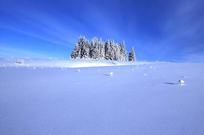 Spruce Grove In Winter Art Print