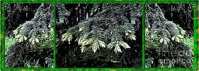 Fir Trees Digital Art - Spruce by Ron Bissett