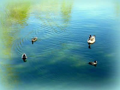 Photograph - Square Dance 3 Ducks And Goose by Cindy Wright