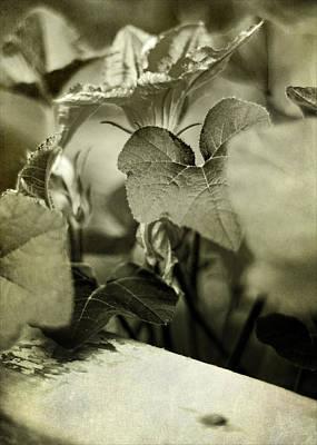 Photograph - Squash Blossom by Rebecca Sherman