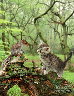 Animal Portraiture Photograph - Squirrel And Kitten by Jane Burton