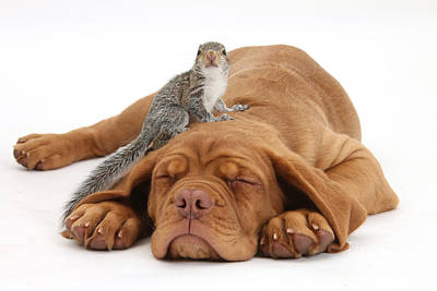 Squirrel And Puppy Art Print by Mark Taylor