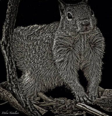 Drawing - Squirrel  by Debra     Vatalaro