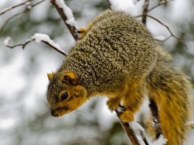 Rabbit Marcus The Great - Squirrel Dive Bomber by LeeAnn McLaneGoetz McLaneGoetzStudioLLCcom