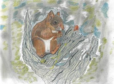 Squirrel Art Print by Don  Gallacher