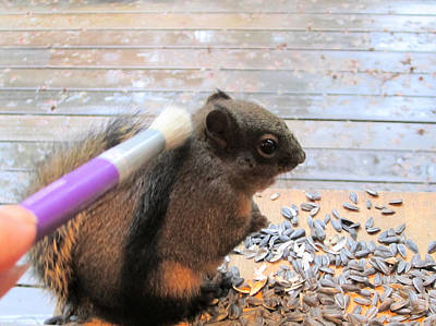 Redish Photograph - Squirrel Gets A Massage by Kym Backland