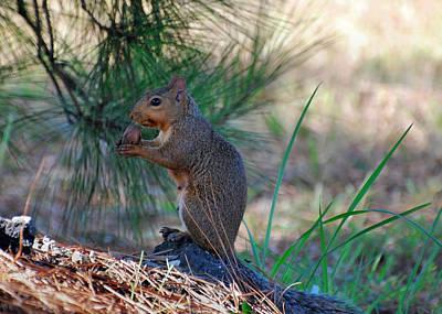 Chipmunk Photograph - Squirrel Holding Pecan - C1505c   by Paul Lyndon Phillips