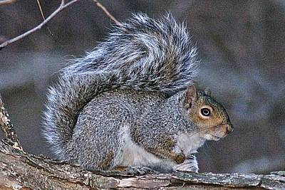 Photograph - Squirrel II by Joe Faherty