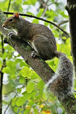 Photograph - Squirrel IIi by Joe Faherty