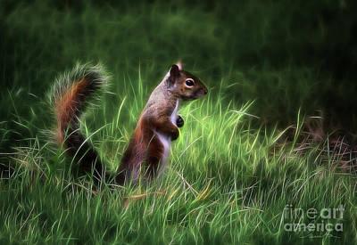 Photograph - Squirrel In Magical Garden by Danuta Bennett