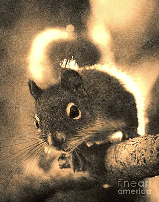 Squirrel In Sepia Art Print by Janeen Wassink Searles