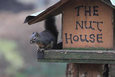 Squirrel In The Nut House Art Print by Sam Amato