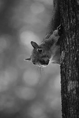 Squirrel On A Tree Art Print by Carrie Munoz