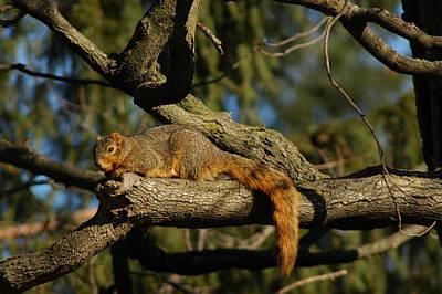 United_states Photograph - squirrel on Gaurd by LeeAnn McLaneGoetz McLaneGoetzStudioLLCcom