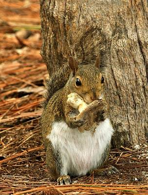 Squirrel On Shrooms Art Print by Rick Frost