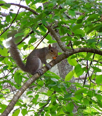 Art Print featuring the photograph Squirrel With Candy by Renee Trenholm