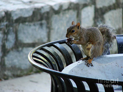Photograph - Squirrelly by Mark Holbrook