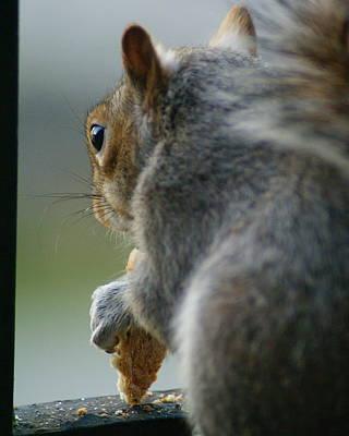 Photograph - Squirrels Eye View by Ben Upham III