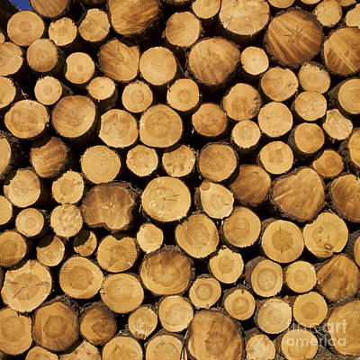 Stack Of Wood Logs. Art Print by Bernard Jaubert