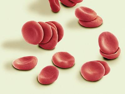 Stacked Red Blood Cells, Sem Art Print by Thomas Deerinck, Ncmir