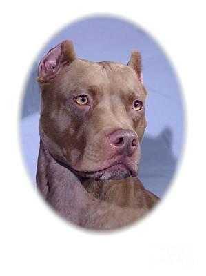 Staffordshire Bull Terrier Digital Art - Staffordshire Bull Terrier - Amstaff 314 by Larry Matthews