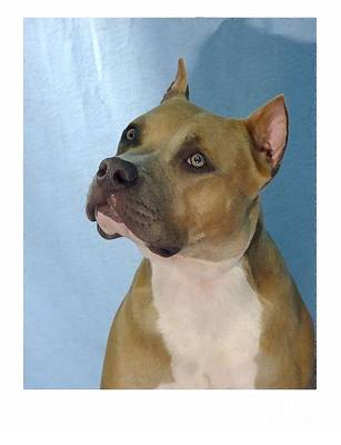 Staffordshire Bull Terrier Digital Art - Staffordshire Bull Terrier - Amstaff 478 by Larry Matthews