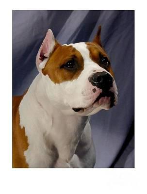Staffordshire Bull Terrier Digital Art - Staffordshire Bull Terrier - Amstaff 795 by Larry Matthews