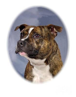 Staffordshire Bull Terrier Digital Art - Staffordshire Bull Terrier - Amstaff 997 by Larry Matthews
