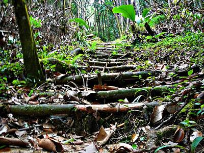 Photograph - Stairs In The Forest by Jenny Senra Pampin